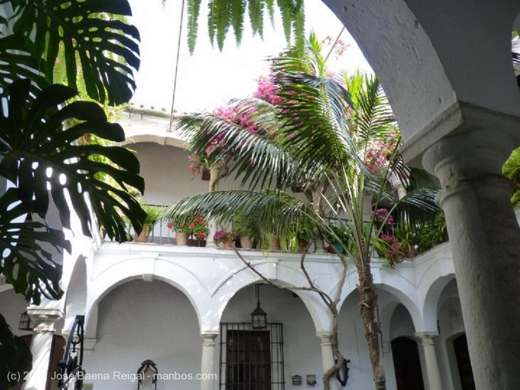 Malaga Pozo y aspidistras Malaga