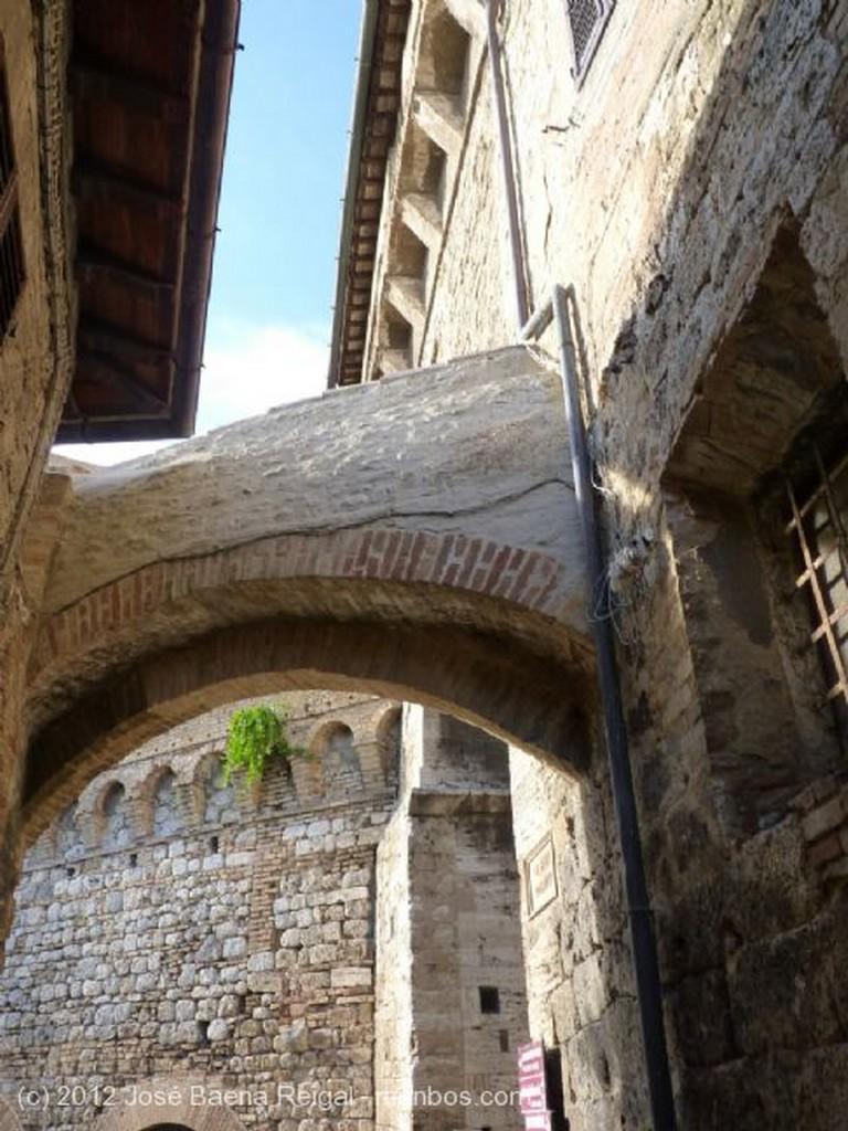 San Gimignano Olivos urbanos Siena