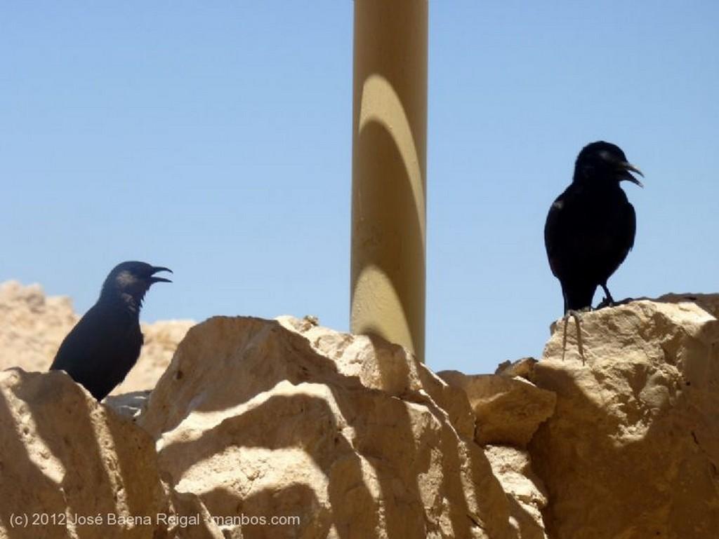 Masada Mirador con cuervos Distrito Meridional