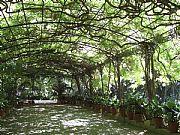 Jardin Botanico La Concepcion, Malaga, España