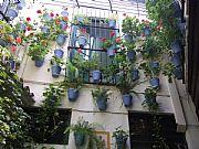 Foto de Malaga, Bodega El Pimpi, España - Macetas azules