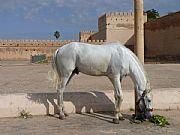 Meknes, Meknes, Marruecos