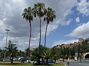Foto de Malaga, Paseo de Reding, España - Con la Alcazaba al fondo