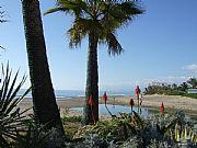 Foto de Marbella, Playa de Elviria, España - Palmeras y dunas