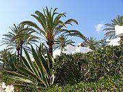 Playa de Casablanca, Marbella, España