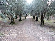 Foto de Villa Adriana, Italia - Luces ultimas