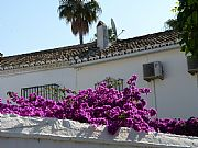 Calle de los Geranios, Fuengirola, España