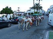 Calle Larga del Palmar, Mijas, España