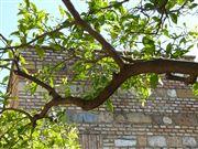 Foto de Malaga, Alcazaba, España  - Naranjo en Flor