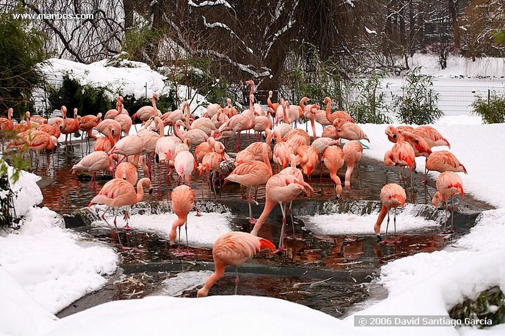 Berlin Zoo Berlin