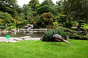Holland park, Londres, Reino Unido